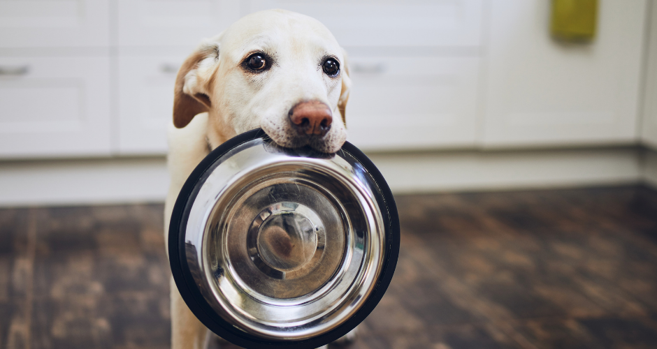 Różnorodność karm na sklepowych półkach ciagle rośnie, a wraz z nią dezorientacja właścicieli psów, chcących wybrać najlepsze jedzenie dla swojego pupila. Czym więc kierować się podczas wyboru karmy dla psa? Na co zwracać uwagę? Czego unikać? I przede wszystkim - jak czytać skład karmy?