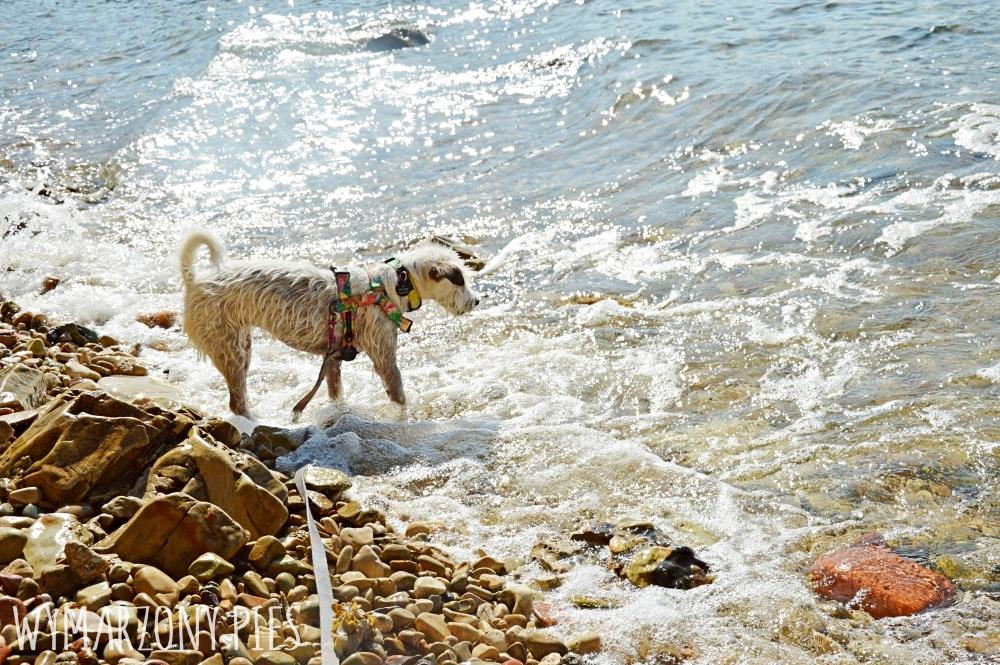 Pies w Chorwacji