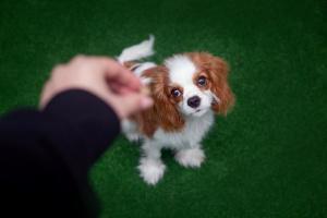 Szkolenie psów w Warszawie