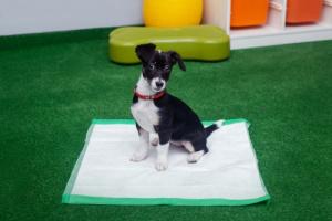 Webianry szkolenie psów
