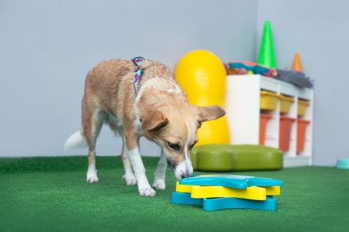 Program zajęć dopasowywany jest do indywidualnych potrzeb opiekuna i jego psa.