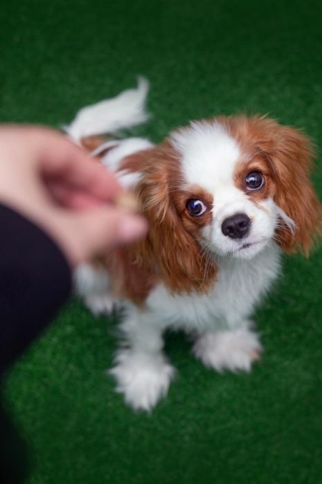 Szkolenia indywidualne skierowane są do wszystkich osób, które chcą pracować nad poprawą zachowania i umiejętności swojego psa