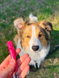Program szkolenia indywidualnego dopasowywany jest do indywidualnych potrzeb opiekuna i jego psa.
