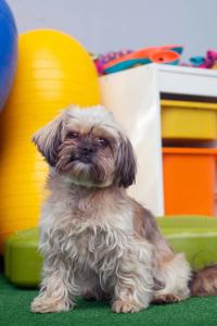 Webinary szkolenie psów