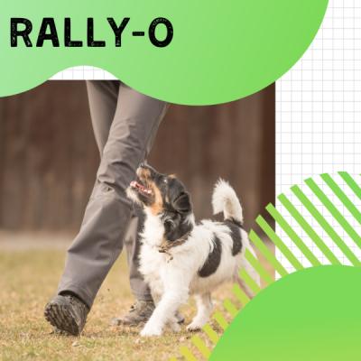 Rally-O