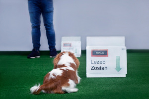 Aktywny pies to szkolenie dla opiekunów psów, którzy szukają ciekawych sposobów na zabawy i treningi oraz chcą spróbować swoich sił w różnych sportach kynologicznych.