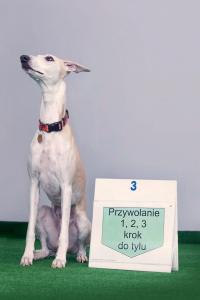 Rally-O to sport kynologiczny, którego założeniem jest budowanie pozytywnej relacji pomiędzy psem a opiekunem.