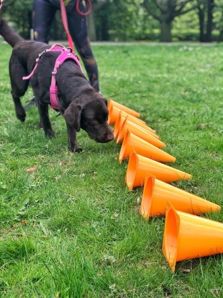 Największą zaletą nosework, jest to, że jest on sportem absolutnie dla każdego psa!
