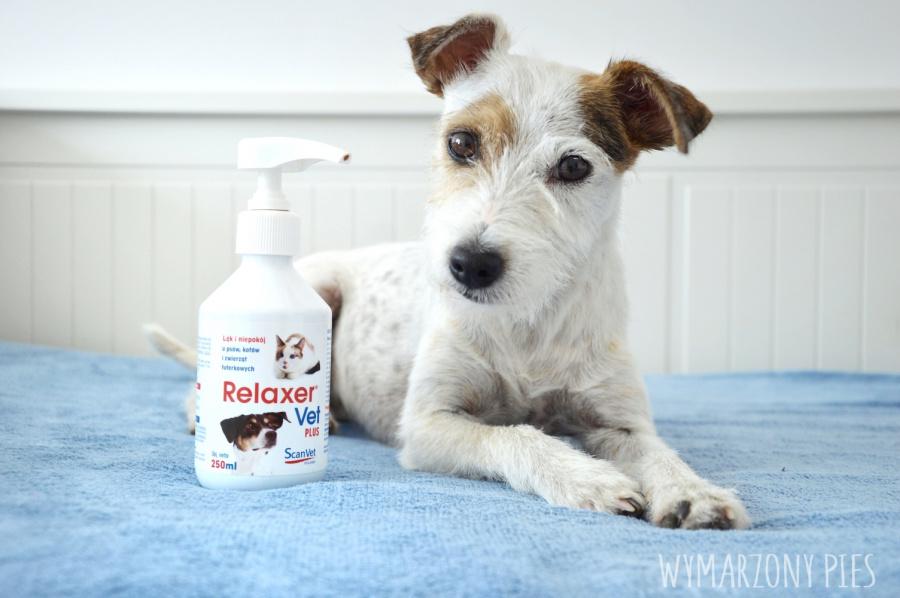 Relaxer VetPlus to suplement diety, który wspomaga organizm psa w sytuacjach stresowychpoprzez złagodzenie uczucia lęku i niepokoju oraz uzyskanie stan relaksu i wyciszenia.