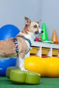 Fitpaws,czyli fitness dla psów, to wspaniała zabawa z wykorzystaniem profesjonalnego sprzętu oraz prosty sposób na wsparcie kondycji naszego psa.