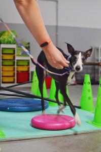 Fitpaws jest doskonałą propozycją dla psów rodzinnych, szczeniąt, psich seniorów, psów lękliwych a także psów sportowych i pracujących.