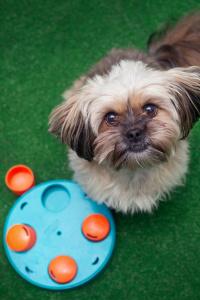 Szkolenie aktywny pies obejmuje zajęcia takie jak brainwork, nosework, rally-o czy agility.