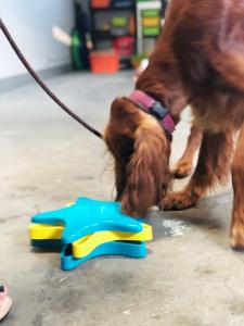 Brainwork buduje pewność siebie psa, rozwija jego myślenie oraz zaspokaja potrzebę eksploracji.