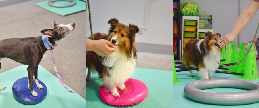 Fitpaws,czyli fitness dla psów, to wspaniała zabawa z wykorzystaniem profesjonalnego sprzętu oraz nauka w komfortowych warunkach pod okiem trenera.