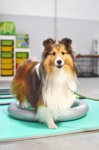 Trening Fitpaws zapewnia bezpieczną aktywność fizyczną oraz umysłową naszemu psu