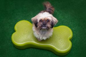 Fitpaws jest doskonałą aktywnością zarówno dla psów sportowych, pracujących i wystawowych,jak i dla psów rodzinnych, szczeniąt i psich seniorów.