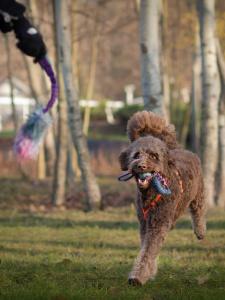 Przywołanie to jedna z najważniejszych umiejętności, które powinien posiadać każdy pies i od której zależeć może jego bezpieczeństwo i zdrowie.