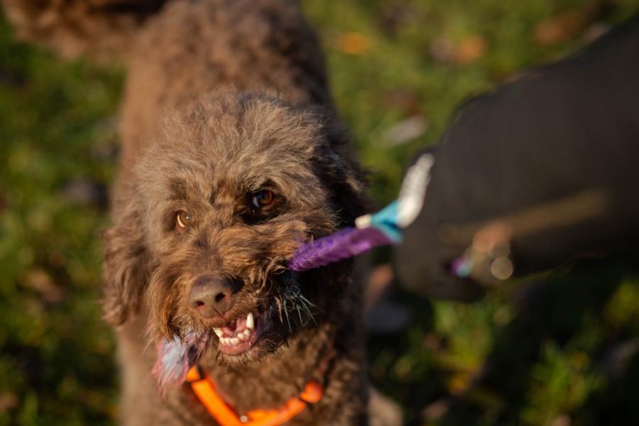 Każdy psiak jest inny i sami musimy określić, co dla naszego psa będzie najlepszą nagrodą, a co nią nie będzie.