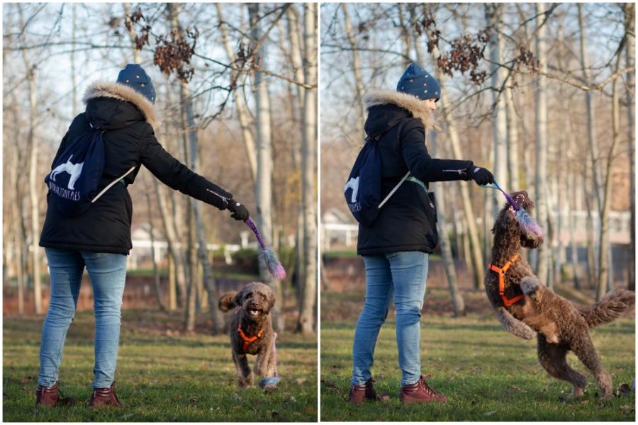 I najważniejsza zasada na koniec - nauka przywołania powinna być dobrą zabawą zarówno dla Twojego psa, jak i dla Ciebie!