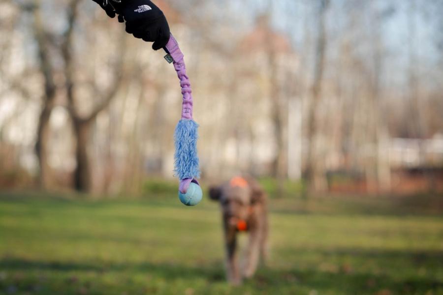Dla wielu psów fantastyczną form nagradzania będzie także zabawa. Jeśli nasz psiak kocha się bawić i zabawka jest dla niego świetną motywacją, wykorzystujmy ją w czasie nauki.