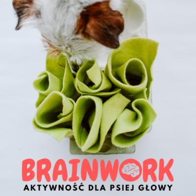 Brainwork – aktywność dla psiej głowy