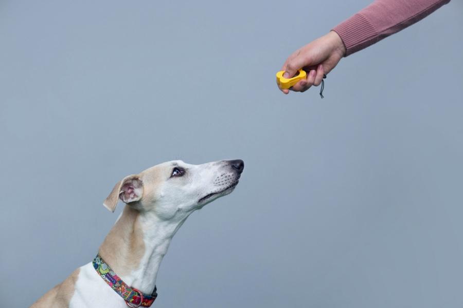 Po kliknięciu zawsze musimy wydać psu obiecaną nagrodę