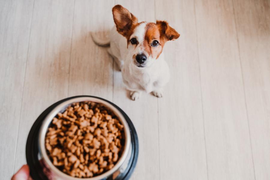 Odpowiednie żywienie ma olbrzymi wpływ na rozwój naszego szczeniaka i niezwykle ważne jest, aby w tym czasie dostarczyć mu wszystkich niezbędnych składników odżywczych.