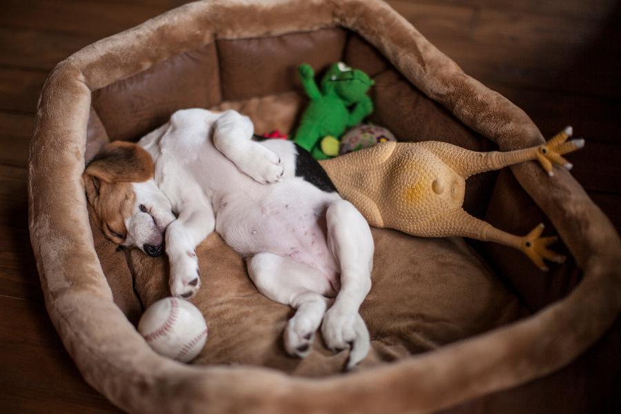 Jedną z pierwszych rzeczy w jaką powinnyśmy się zaopatrzyć jest posłanie, w którym nasz szczeniak będzie spał i odpoczywał.