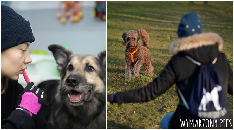 Nam i psu żyje się swobodniej, gdy możemy odpowiedzialnie spuścić pupila ze smyczy, bez obaw o bezpieczeństwo jego i innych, bo mamy opanowane do perfekcji przywołanie.