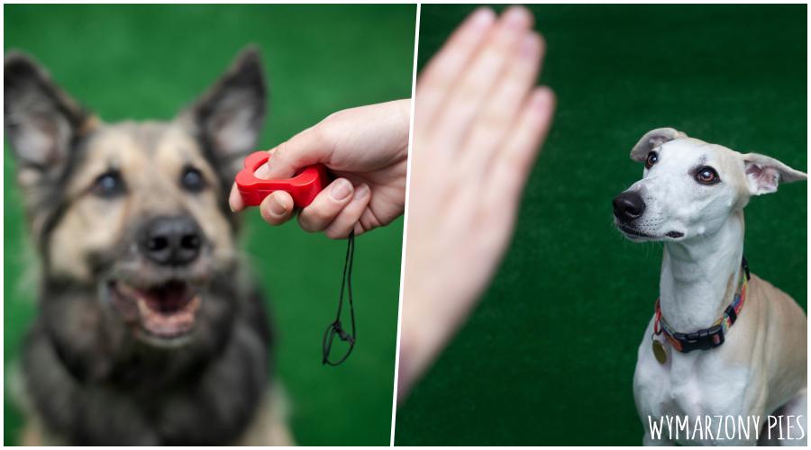 Coraz więcej świeżo upieczonych opiekunów psów, decyduje się na to, aby zapisać się ze swoim pupilem do psiej szkoły.