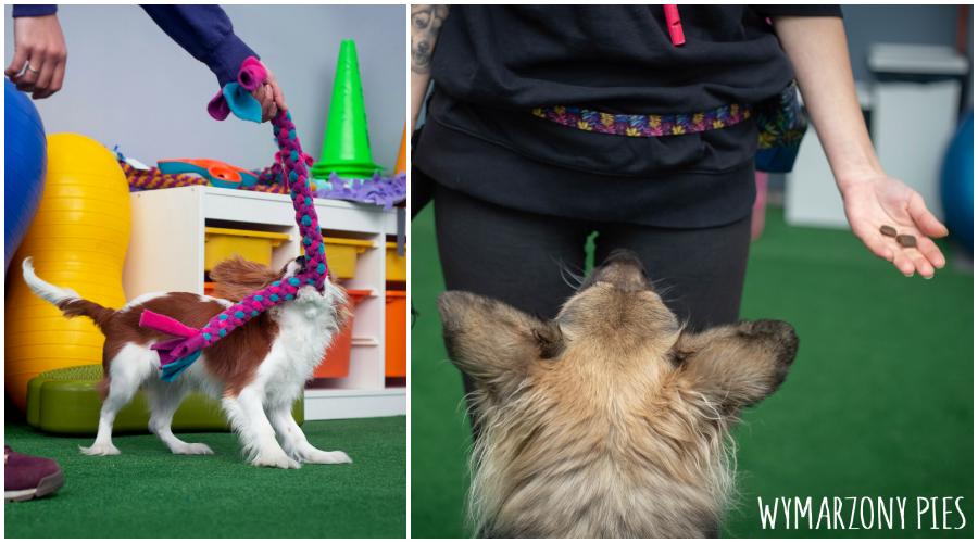 Motywacja to nic innego, jak wiedza na temat tego, co naszemu psu sprawia największą frajdę, które smakołyki preferuje, jaki rodzaj zabawy jest dla niego najprzyjemniejszy.