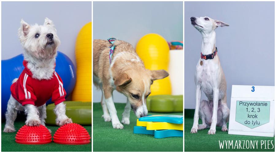 Szkolenie z zakresu pracy węchowej takie jak na przykład nosework, podnosi pewność siebie naszego psa i uczy go samodzielności. Treningi posłuszeństwa potrafią okiełznać psa, który jest wulkanem energii.