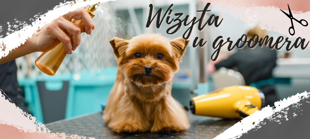 Jak wybrać odpowiedniego groomera, aby mieć pewność, że zadba on nie tylko o futro naszego psiaka, ale także o jego komfort w czasie zabiegu?
