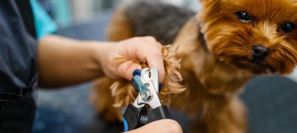 Wybór odpowiedniego salonu groomerskiego to pierwszy krok do sukcesu. Na wstępie warto zebrać opinie innych osób oraz odwiedzić salon z wizytą i porozmawiać z jego pracownikami. Jeśli danemu grommerowi zależy na komforcie swoich psich klientów, nie powinien mieć nic przeciwko takiej wizycie.