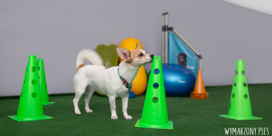 Szacuje się, że psy są w stanie rozpoznać dużo więcej zapachów, niż my jesteśmy w stanie rozróżnić kolorów. Każdy zapach psiak jest w stanie odseparować od siebie, więc jak w klasycznym przykładzie - kiedy my czujemy zapach rosołu, nasz pies czuje zapach marchewki, pietruszki, cebuli i każdy inny składnik osobno