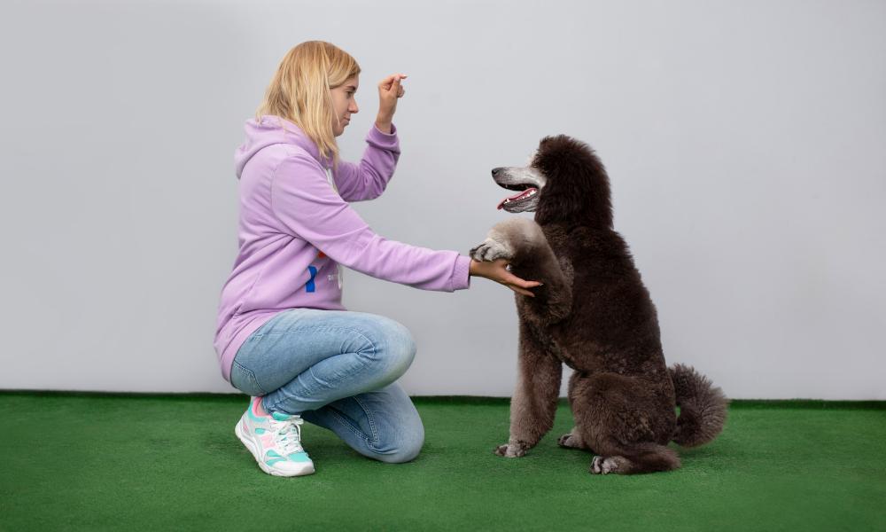 Podczas naszych szkoleń dowiesz się, jak prawidłowo budować relacje ze swoim psem, jak odpowiednio motywować go do wspólnej pracy oraz jak skutecznie się z nim komunikować.