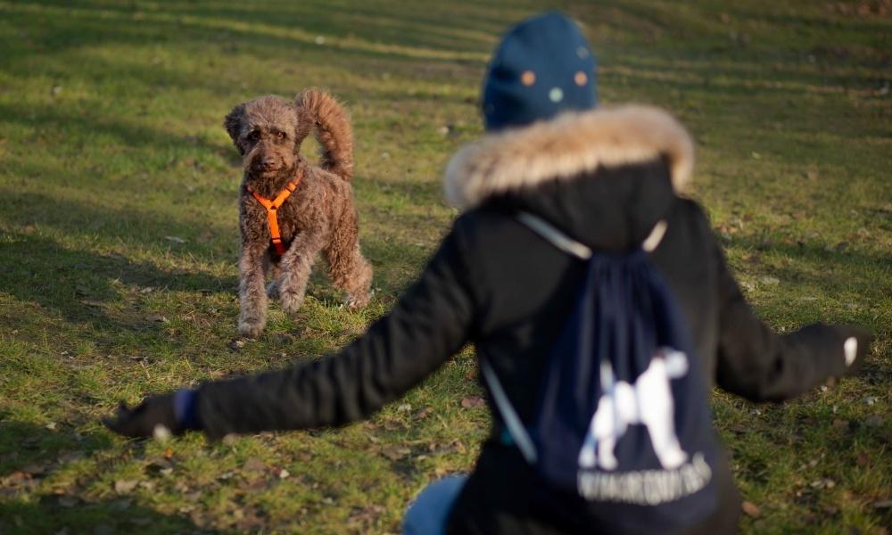 Wymarzony pies to szkoła dla psów stworzona z myślą psich opiekunach, którzy chcą zyskać nowe umiejętności przydatne w codziennym życiu z psem, budować wzajemną relację opartą na zaufaniu i komunikacji oraz aktywnie spędzić czas ze swoim pupilem. Znajdziesz u nas kursy grupowe, zajęcia indywidualne oraz treningi psich sportów.