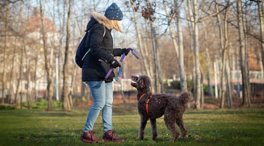 Petsitter, czyli opiekun zwierząt to osoba, która w razie potrzeby zaopiekuje się Twoim zwierzakiem. Petsitter może wziąć Twojego psiaka na spacer, spędzić z nim czas kiedy dłużej nie ma Cię w domu, czy nawet zaopiekować się nim podczas Twojego wyjazdu.