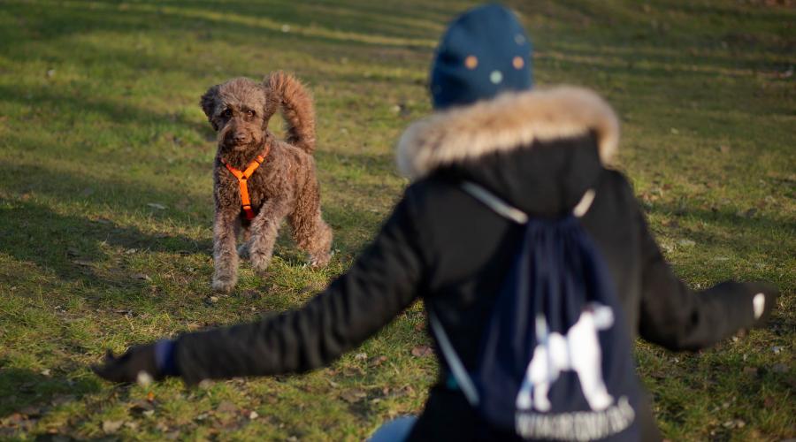 Warto, aby nasz petsitter posiadał doświadczenie i wiedzę z zakresu psiego behawioru i komunikacji.