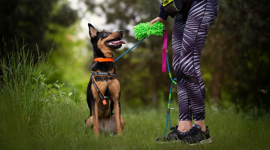 Spacer dla psa toczas na prezentowanie wszystkich najważniejszych zachowań, takich jak swobodna eksploracja czy potrzeba fizycznego i psychicznego zmęczenia.