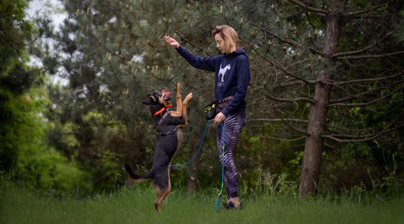 Spacer jest idealną okazją do przetrenowania umiejętności naszego psiaka w trudniejszych warunkach. Dodatkowo środowisko miejskie możemy wykorzystać do tak zwanej generalizacji zachowań - czyli pokazania psu, że ta sama komenda może być wykonywana w różnych sytuacjach.