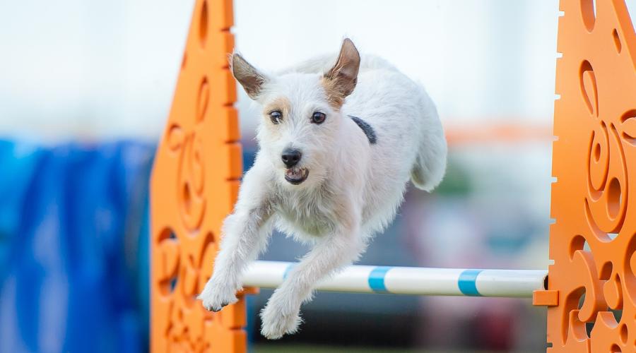 Jeśli damy naszemu psu możliwość wyboru i posłuchamy go w tym, jaki sport daje mu największą przyjemność, odniesiemy prawdziwy sukces!