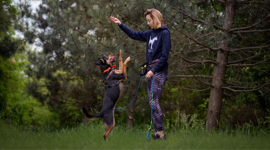 Zarówno aktywność fizyczna i przysłowiowe już wybieganie, ale także aktywność umysłowa i uczenie się mają ogromne znaczenie w psim życiu.